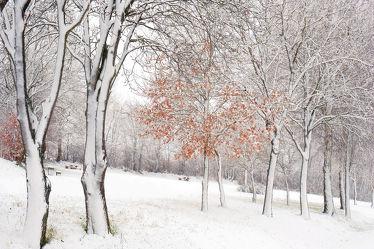 Bild mit Bäume, Winter, Schnee, Wälder, Wald, Baum, Winterzeit, Winterwald