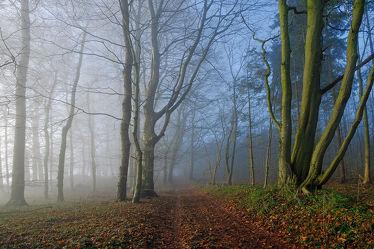Bild mit Farben, Natur, Grün, Bäume, Winter, Blau, Dunkelheit, Nebel, Sonne, Braun, Wald, Winterzeit, Zweifarbig, Orginalfarben, Hellgrau, Orginal