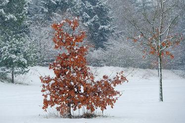 Bild mit Landschaften, Winter, Schnee, Landschaft, Winterzeit, Frost