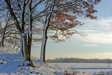 Bild mit Landschaften, Bäume, Schnee, Landschaft, Landschaft, Gegenlicht, Winterzeit, Abendlicht