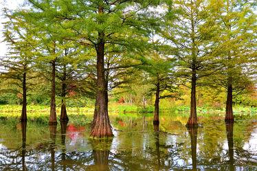 Bild mit Wasser, Landschaften, Bäume, Gewässer, Sommer, See, Park, Ufer