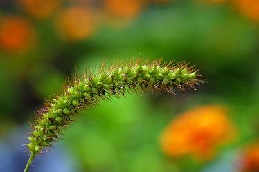 Bild mit Gräser, Herbst, Wassertropfen, Bunt, Tropfen, FARBE, farbig