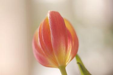 Bild mit Grün, Frühling, Tulpe, Bunt, Ausspannen, Dekoration