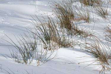 Bild mit Grün, Winter, Schnee, Weiß, Winterzeit, Moor, Wind, Binsen, Vorfrühling, März, Schneeverwehungen
