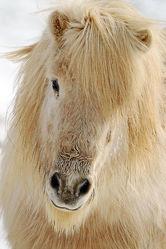 Isländer Portrait
