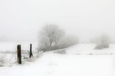 Bild mit Bäume, Nebel, Felder, Wiesen, tor, Haine, Gatter