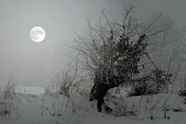 Bild mit Natur, Bäume, Nebel, Mond, Baum, Felder, Wiesen, moon, Vollmond