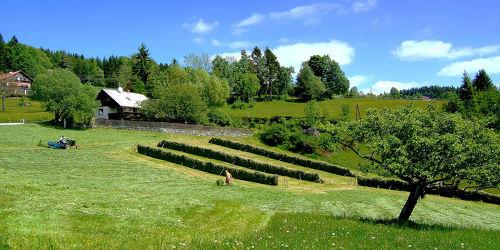 Bild mit Bäume, Winter, Herbst, Sommer, Alm, Österreich, Landschaft, Gras, Heu, Idylle, Leben, landwirtschaft, ökologie, Arbeit, Grasschnitt, Handwerk