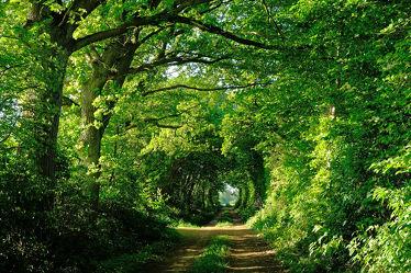 Bild mit Grün, Bäume, Frühling, Sträucher, Weg, Allee, Erholung, Sonnenlicht, Ausspannen, Laubengang, Ziel, Durchgang