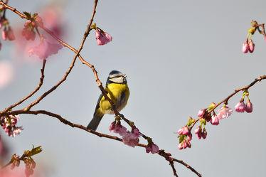 Frühlingsvogelgesang