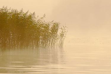 Bild mit Gewässer, Seen, Sonnenaufgang, Nebel, Schilf, Entspannen, Ausspannen, Ausspannen, Seenebel, Idylle, Dunst, Morgengrauen, Schimmern
