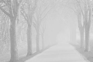 Bild mit Bäume,Winter,Herbst,Nebel,Alleen,Allee,Kälte,Kälteeinbruch,Vorsicht,Wärmeeinbruch,Wetterwechsel,Strassen,Achtung,Autofahrer
