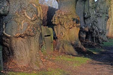 Bild mit Pflanzen, Bäume, Sonnenschein, Baumstümpfe, Alter_Baum, heilung, Stümpfe, Astmerkmale