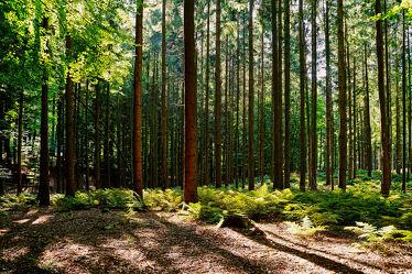 Bild mit Bäume, Herbst, Sonne, Wald, Nadelwald, Baumstämme, Farne, Sonnendurchflutet