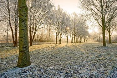 Bild mit Landschaften, Bäume, Winter, Sonnenaufgang, Sonne, Schleswig_Holstein, Raureif, Naturpark_Westensee, Westensee, Nortorfer_Land, Nortorf