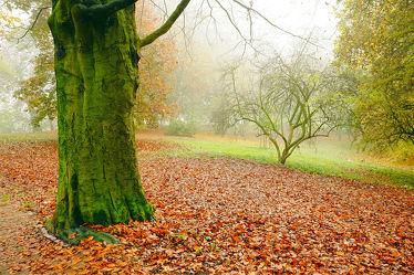 Bild mit Bäume, Herbst, Wege, Nebel, Blätter, Baumstämme, Feuchtigkeit, Regen, Parkanlage, Herbststimmung, Wall, Laub, Dunst, Rotbunt, Fahrradwege, Trüb, Blätterrasen, Emder_Wallring, Spazierwege, Grünrinde