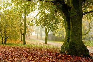 Bild mit Bäume, Herbst, Nebel, Emden, Ostfriesland, weite, Dunst, Stärke, Wallring, große, Dimensionen, Kräfte, Wallanlage, Tiefe, Emder_Wall