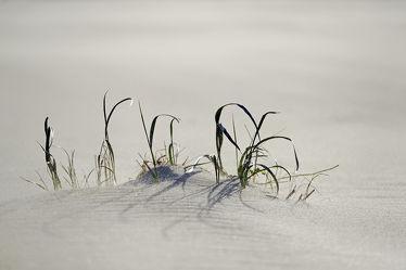 Bild mit Augen, Pflanzen, Strände, Sand, Strand, Strand, Wind, sturm, Gesicht, Sandsturm, Kleidung, Sichtlos, Blind, Blind, Sandkörner