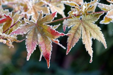 Bild mit Winter, Eis, Herbst, Blätter, Bunt, farbig, Frost, Wandern, Raureif, Wintereinbruch, Eiskristalle, Eisheiligen, Nachtfrost, Kristalle