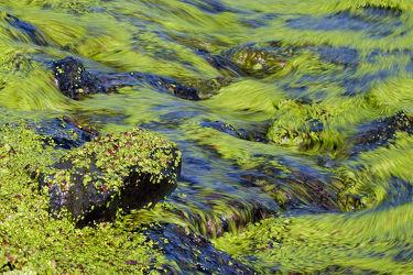 Bild mit Wasser, Grün, Gewässer, Seen, Meer, Steine, Ostfriesland, Wasserpflanzen, Entengrütze, Flott, Wasserlinsen, Entenflott, Grüne_Decke