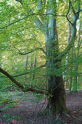 Bild mit Grün, Wald, Baum, Baumstamm, Blätter, Waldboden, Licht, Laubwald, alt
