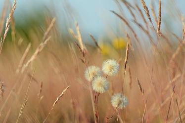 Bild mit Grün, Gräser, Himmel, Blau, Braun, Felder, Wiesen, Herbststimmung, Idylle, Kargflächen, Ocker