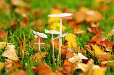 Bild mit Herbst, Blätter, Gegenlicht, Licht, Pilze, Rasen, Idylle, Ostfriese