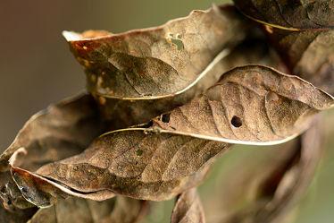Bild mit Braun, Blätter, Herbstblätter, Tapete, Hintergründe, Deko, Dekoration, Ostfriese, Kurioses, Formen, Herbstsonnenblumenblätter
