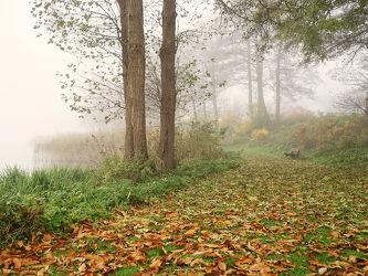 Bild mit Seen, Herbst, Sträucher, Nebel, Blätter, Ruhe, Stille, Wardersee, Idylle, Ufer, Ostfriese, Abgeschiedenheit, Kleine_Welt, pfade, Schleswig_ Holstein