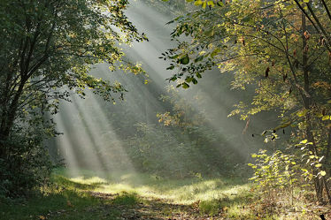 Bild mit Bäume, Herbst, Sträucher, Wald, Waldweg, Wanderweg, Erholung, Sonnenstrahlen, Sonnenlicht, Wandern, Ausspannen, Geniessen, Strahlen
