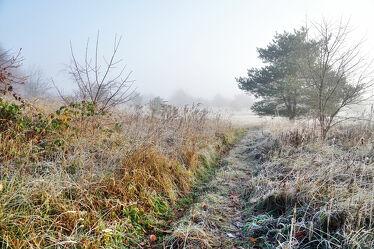 Bild mit Gräser, Winter, Herbst, Sträucher, Sonnenaufgang, Nebel, Landschaft, Kälte, Raureif, Dunst