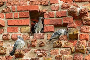 Bild mit Vögel, Steine, Ziegel, kirchturm, Pellworm, Gelege, Bruthöhle, Mauerwerk, Historisches_Gebäude