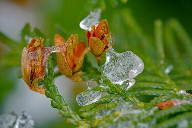 Bild mit Pflanzen, Winter, Eis, Makro, Raureif