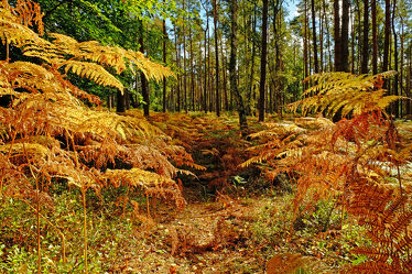 Bild mit Natur, Bäume, Herbst, Wald, Rügen, Farne, Öko