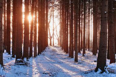 Bild mit Winter, Nadelwald, Gegenlicht, Abendsonne