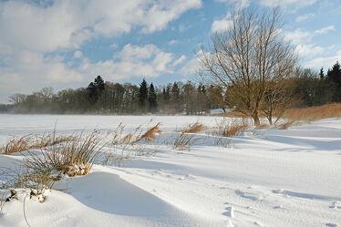 Bild mit Gräser, Himmel, Bäume, Winter, Schnee, Wolken, Gegenlicht, Sonnenlicht, Wind, sturm, Seeufer, Seeufer, Schneeverwehungen, Schneewehen