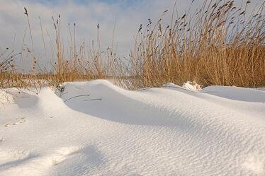 Bild mit Bäume, Winter, Schnee, Gegenlicht, Sonnenlicht, Wind, sturm, Seeufer, Seeufer, Schneeverwehungen, Schneewehen
