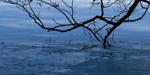 Bild mit Bäume, Eis, Gewässer, Seen, Kälte, Ausspannen, Zweige