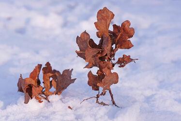 Bild mit Schnee, Eis, Blätter, Sonnenschein, Makro, nahaufnahme, Kälte, Zweige, Skulptur