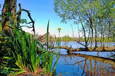 Bild mit Natur, Wasser, Bäume, Lilien, Reisen, Moor, Naturschutzgebiet, Polen, Ökoland