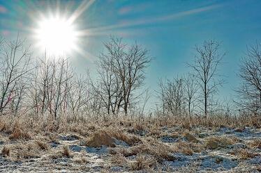Bild mit Gräser, Himmel, Bäume, Winter, Sonnenaufgang, Kälte, Frost, Raureif