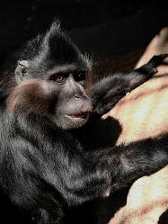 Bild mit Säugetiere, Affe, nahaufnahme, familie, Porträt, Freigehege, Neugeburt, Naturpark, Gettorf, Trennung