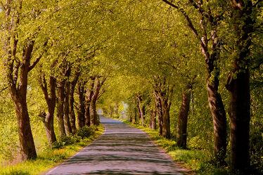 Bild mit Bäume, Laubbäume, Sommer, Sonne, Strasse, Insel Rügen, baumallee, Rügen