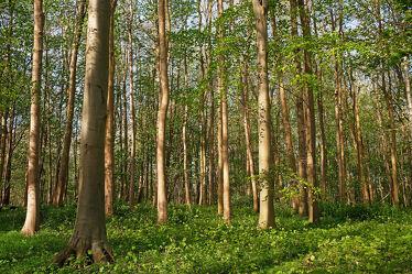 Bild mit Grün, Wälder, Frühling, Sonne, Wald, Waldboden, Insel Rügen, Rügen
