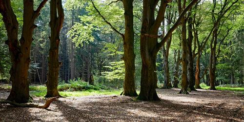Bild mit Wald, Lichtung, Sonnenschein, Waldrand, Schatten, Baumbestand