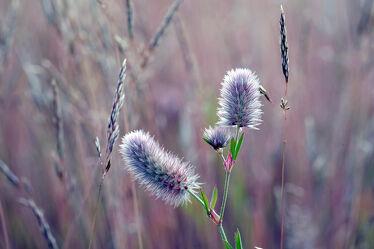 Bild mit Gräser, Blumen, Felder, Wiesen, Dürre