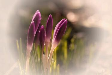 Bild mit Blumen, Frühling, narzissen