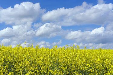 Bild mit Gelb, Himmel, Wolken, Weiß, Blau, Raps, Felder