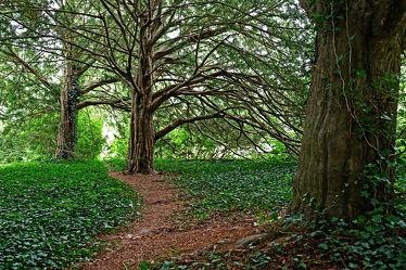 Bild mit Bäume, Baum, rustikal, Park, garten, alt
