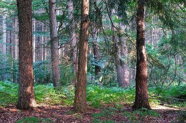 Bild mit Bäume, Sommer, Sonne, Wald, Lichtung, Licht, farn